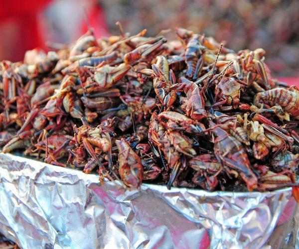 belalang makanan olahan © 2017 brilio.net