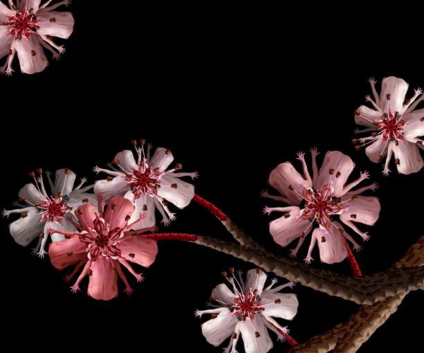 bunga & hewan dari tubuh manusia telanjang  © 2017 ceceliawebber.com