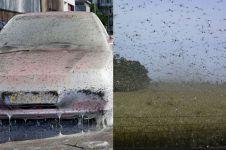 5 Serangan serangga ini bikin bergidik ngeri, ada yang di Indonesia
