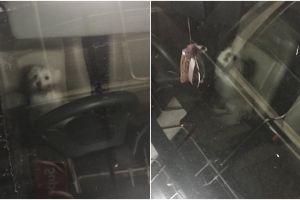 Kisah anjing ditinggal pemiliknya 8 jam di mobil ini viral