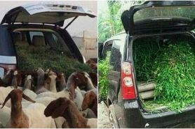 5 Potret saat mobil mewah digunakan mengangkut pakan ternak