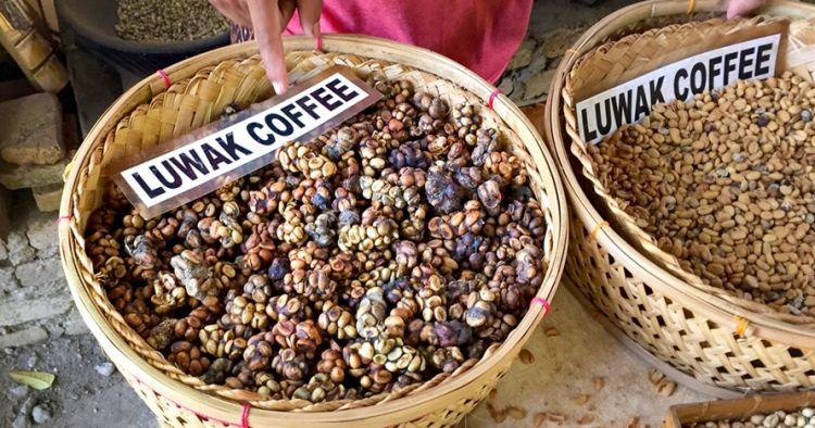 6 Fakta kopi luwak, mungkinkah dijual dengan harga murah?