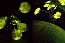 Ilmuwan ini ciptakan tanaman yang bisa menyala sendiri, gantikan lampu
