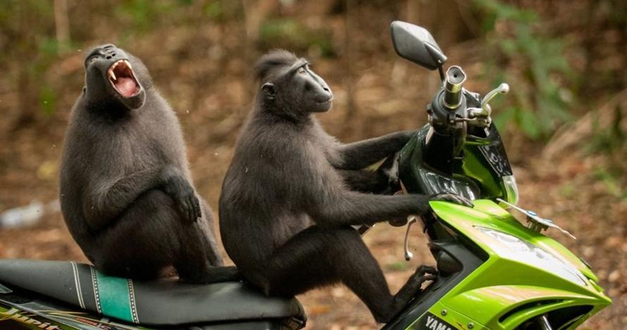 10 Momen hewan paling lucu yang tertangkap kamera di tahun 2017