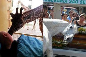 8 Momen binatang bersedih karena ditinggal mati pemiliknya
