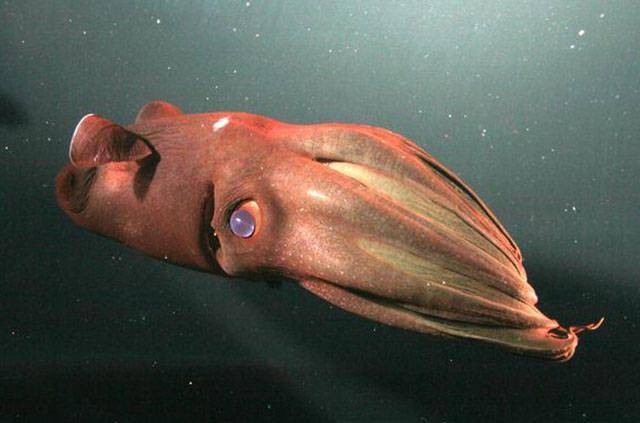 hewan mengerikan dasar laut © 2017 brilio.net berbagai sumber