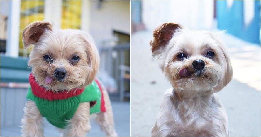Didandani bak manusia, 10 foto anak anjing ini bikin kamu gemas