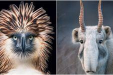 Foto 15 hewan terancam punah jepretan pria ini epik banget