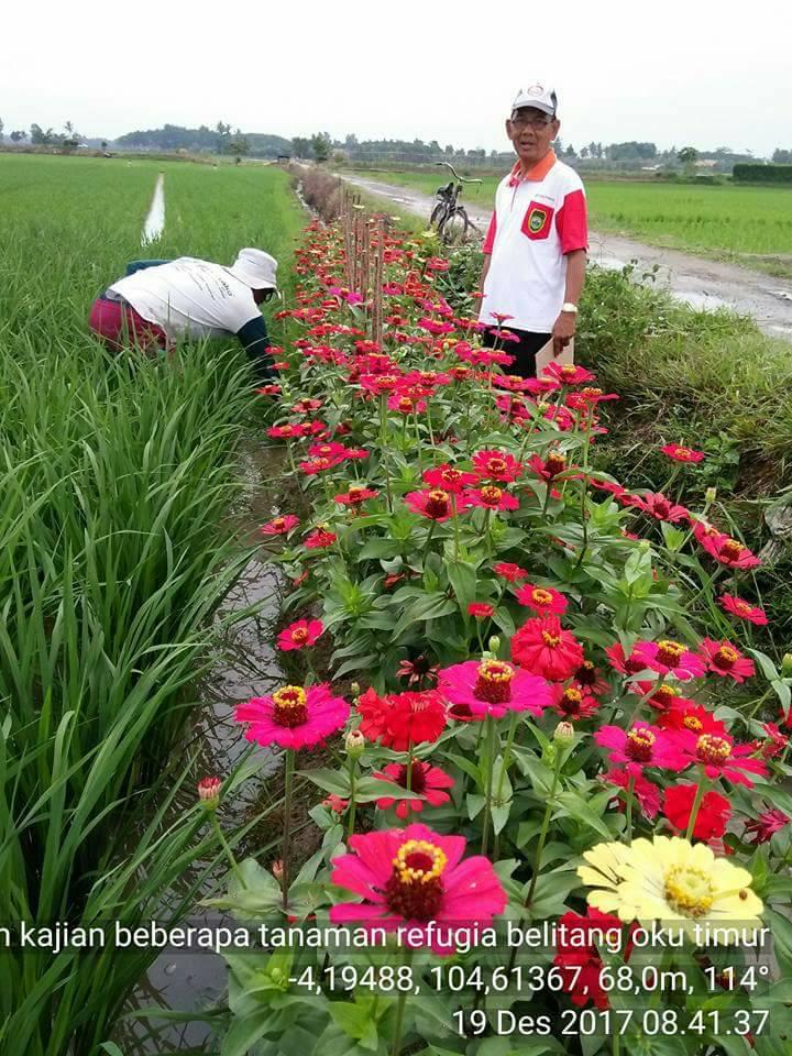 10 Potret Sawah Dengan Pagar Bunga Cantik Dan Baik Untuk Usir Ha
