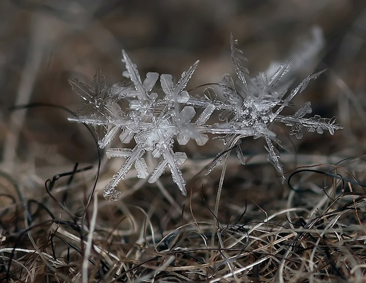 makro butiran salju andrew osokin  © 2018 berbagai sumber