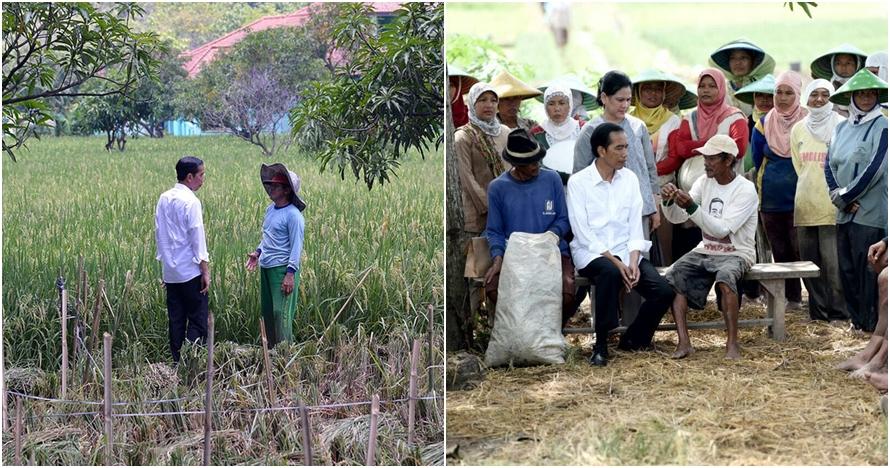 5 Potret Jokowi saat blusukan ke sawah, suka menyapa rakyat dari dekat