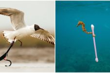 Momen hewan 'pungut' sampah di laut ini sindir keras buat yang nyampah
