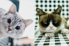 5 Akun Instagram kucing ini jumlah followersnya nyaingin artis