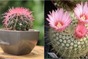 8 Jenis kaktus hias paling kece, dijamin bisa permanis ruanganmu