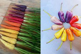 10 Foto gradasi buah dan sayuran ini bikin puas melihatnya