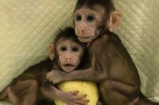 Ilmuwan China berhasil kloning dua bayi monyet, usia 7 dan 8 minggu