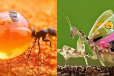 10 Jenis serangga aneh yang nggak banyak diketahui, bikin melongo