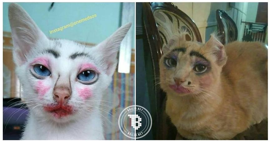 10 Foto kucing dimakeup sama pemiliknya ini bikin ngakak, iseng banget