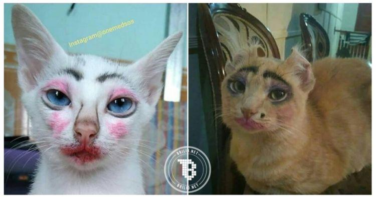 Gambar Kucing Jelek godean.web.id