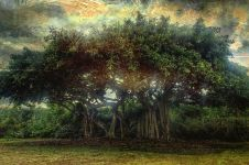 5 Jenis pohon ini dipercaya jadi mitos tempat bersarangnya hantu