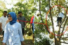 7 Aksi heboh Iti Octavia, bupati Lebak bersemangat panjat pohon durian