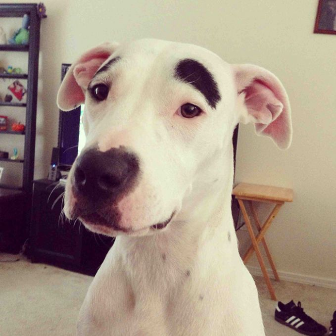 potret anjing dikasih alis ini bikin ketawa © 2018 berbagai sumber
