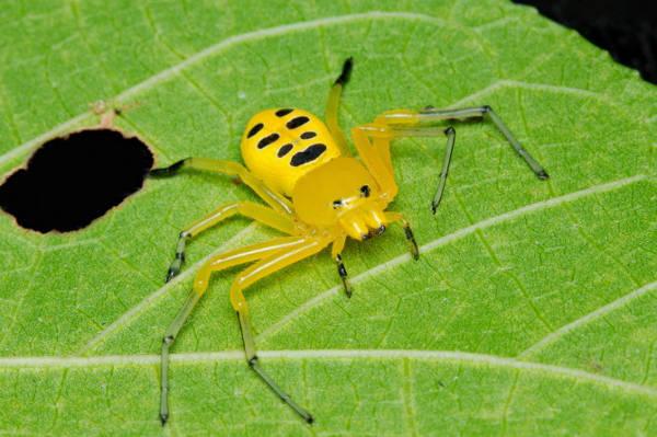 labah-labah © listamaze.com
