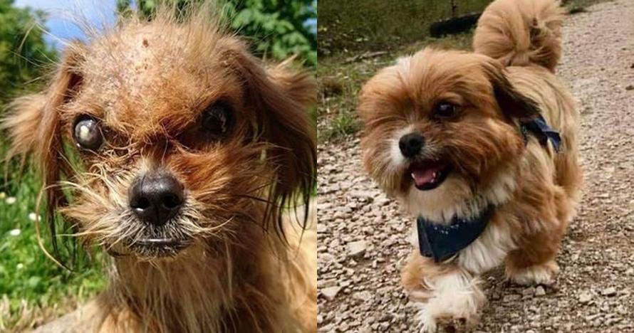 Awalnya dibuang & penyakitan, kisah anjing Frodo ini bikin terenyuh