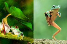 10 Potret katak mungil dalam berbagai gaya, bikin pengen pelihara