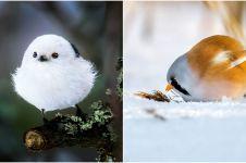 10 Potret Angry Birds di dunia nyata, lebih imut dari versi kartun