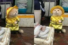 Dicap hewan pemalas, kucing ini malah rajin jualan ikan di pasar