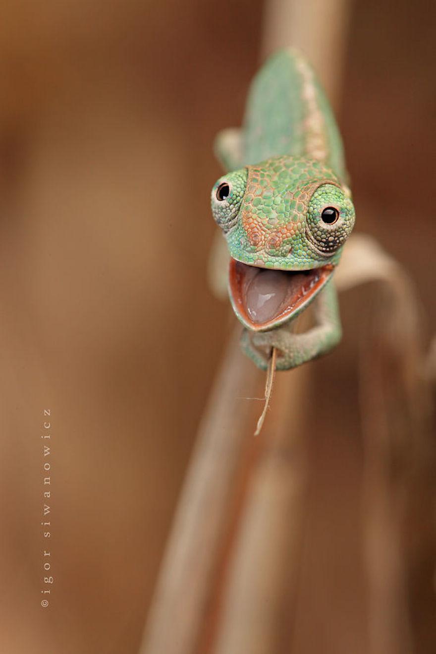 reptil lucuh banget © earthporm.com