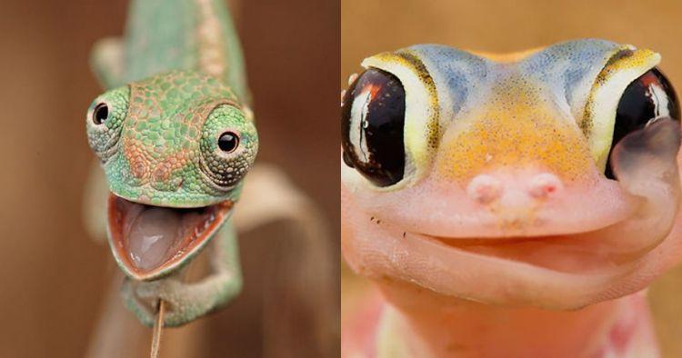 Biasa terkesan seram, 10 foto ini buktikan reptil bisa sangat imut
