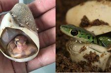 Bukannya seram, 7 penampakan ular baru menetas ini imut banget