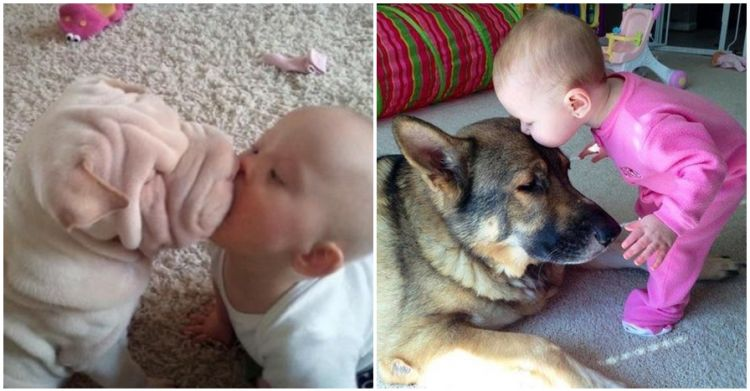 Anjing Pintar Berita Terbaru Anjing Pintar Hari Ini