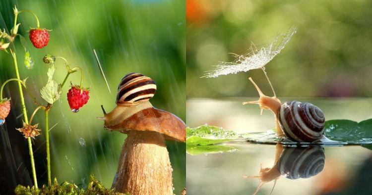 10 Foto ini buktikan habitat siput seindah negeri dongeng