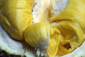 Durian Musang King, varian baru buah durian yang sedang naik daun