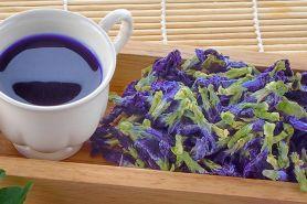 Sensasi teh biru bunga telang yang bikin badan bugar