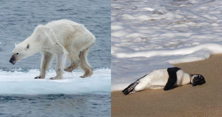 Miris, ini 10 hewan yang terancam punah karena dampak pemanasan global