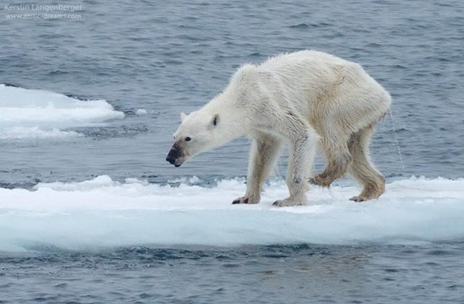 punah global warming © 2018 brilio.net berbagai sumber