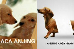 10 Meme 'dunianya anjing' ini kekocakannya bikin cengar-cengir