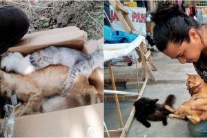 Kejam, 17 ekor kucing peliharaan pria ini mati diracun
