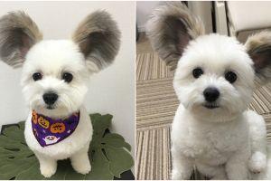 Telinganya kayak Mickey Mouse, ini 10 potret gemas anjing dari Jepang
