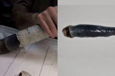 Potret cacing misterius tertua di dunia, ukurannya bikin syok