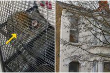 Pria ini dilarang pelihara hewan oleh pemerintah, alasannya bikin syok