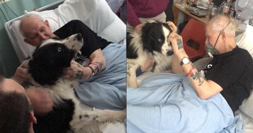Divonis usianya tak lama lagi, ini 6 momen haru kakek bersua anjingnya