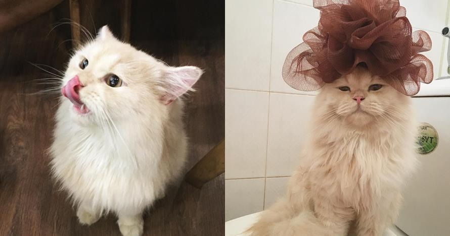 9 Potret lucunya Meepo, kucing menggemaskan yang senang mandi
