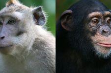Sering dikira sama, ini 4 perbedaan monyet dan kera