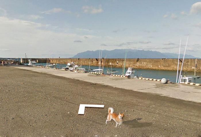 anjing kejar mobil maps © Boredpanda