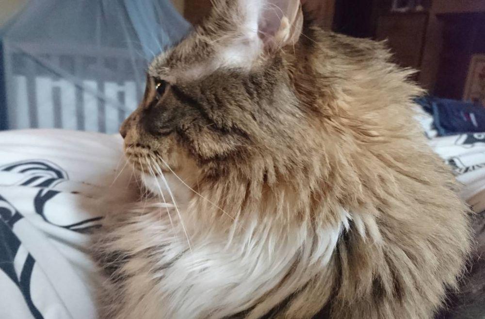 kucing ludo © 2018 instagram